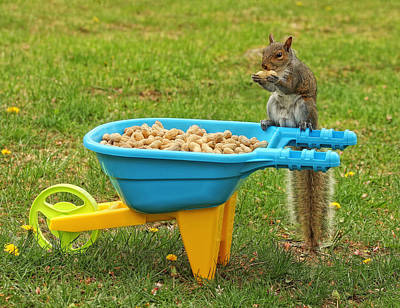 Spoiled Squirrel Poster
