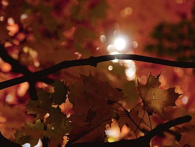Spotlight On Fall Poster by Cheryl Baxter