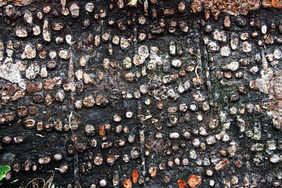 Spotted Bark Poster