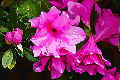 Spring Azalea Blossoms Poster