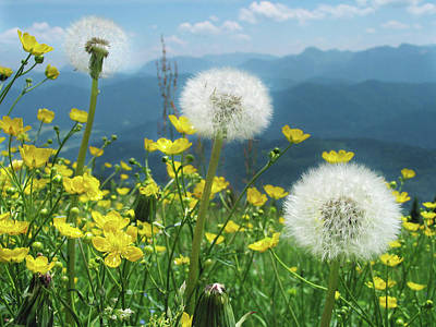 Spring Flower Meadow With Mountain Poster