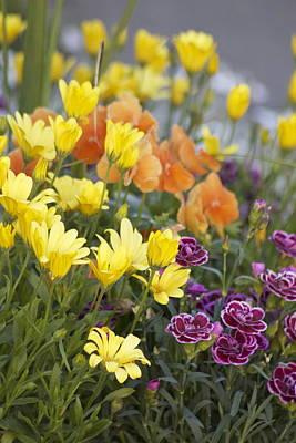 Spring  Garden Poster by Sylvia Hart