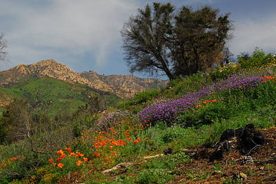 Poster featuring the photograph Spring In Santa Barbara by Lynn Bauer