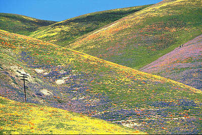 Spring In The Gorman Hills Poster