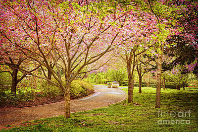 Poster featuring the photograph Spring In The Park by Cheryl Davis