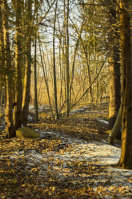 Spring Light On The Winter Trail Poster by LeeAnn McLaneGoetz McLaneGoetzStudioLLCcom