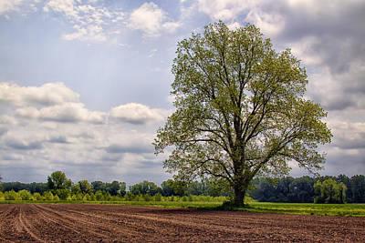 Spring Shade Tree Poster by Bill Tiepelman