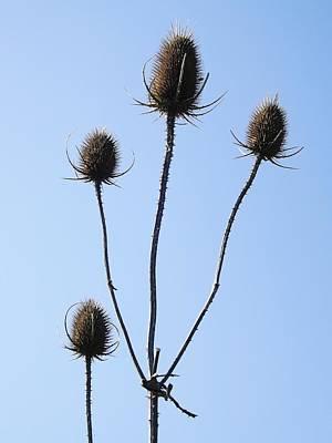 Spring Weeds 1 Poster by Gerald Strine