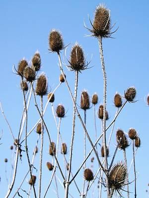 Spring Weeds 2 Poster by Gerald Strine