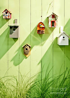 Poster featuring the photograph Spring Wooden Wall by Ariadna De Raadt