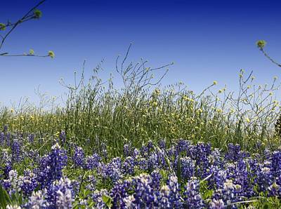 Poster featuring the photograph Springtime Bluebonnets by Lynnette Johns