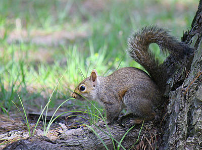 Poster featuring the photograph Squirrel Hiding In The Grass by Roena King
