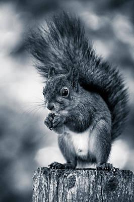 Squirrel In Monochrome Poster
