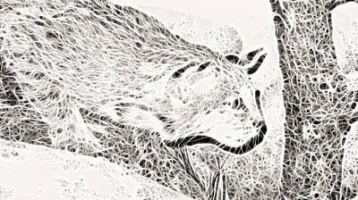 Stalking Poster by Douglas Barnard