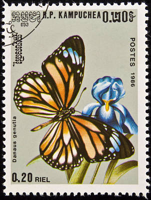 Stamp. Butterfly On Flower. Poster by Fernando Barozza