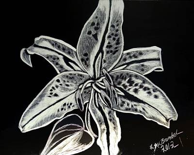 Poster featuring the drawing Star Gazer Lily by Lisa Brandel