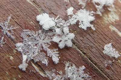 Poster featuring the photograph Star Shaped Snow Flakes by Chad and Stacey Hall
