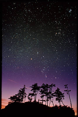 Starfield Over Trees Poster