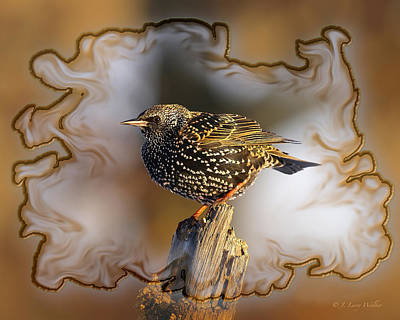 Starling On His Perch Poster by J Larry Walker