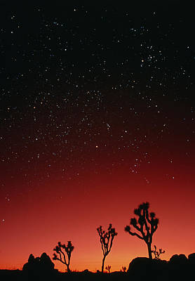 Starry Sky And Sunset Taken In Joshua Tree Park Poster