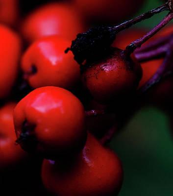 Steamboat Springs Berries Poster