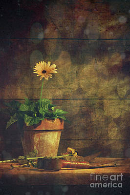 Still Life Of Yellow Gerbera Daisy In Clay Pot Poster