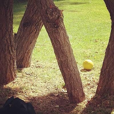 #stilllife #still #life #nature #orange Poster by Anna Valencia