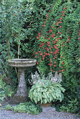 Stone Birdbath Amongst Flowers Poster by Archie Young