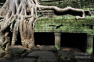 Strangler Fig Tree Roots On Temple Poster by Sami Sarkis