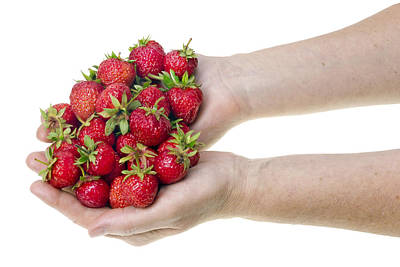 Strawberries In Hands Poster
