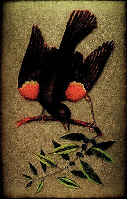 Sturnus Niger Alis Supernis Rubro Colore Poster
