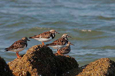 Sullivan's Island Shore Birds Poster by Melissa Wyatt