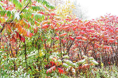 Sumac And Snow Along The Highland Scenic Highway Poster