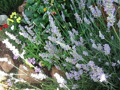 Poster featuring the photograph Summer Lavender by Deb Martin-Webster