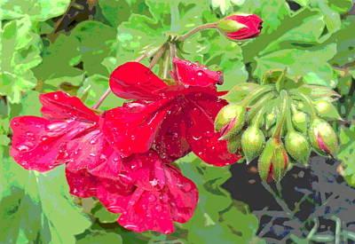 Sun Dappled Geranium Flowers After Rain Poster