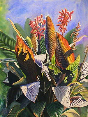 Sun Kissed Cannas Poster