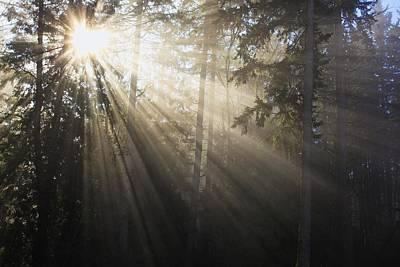 Sun Shining Through Morning Fog And Poster