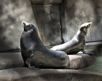 Poster featuring the photograph Sunbathing Seals by Mary Almond