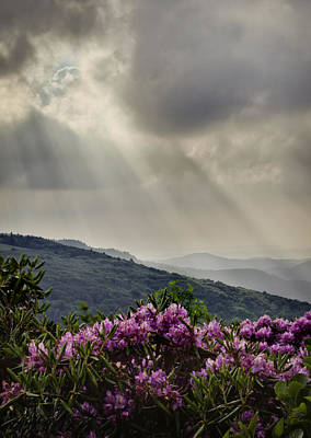Sunbeams And Rhododendron Poster
