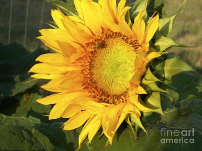 Poster featuring the digital art Sunflower Digital Art by Deniece Platt