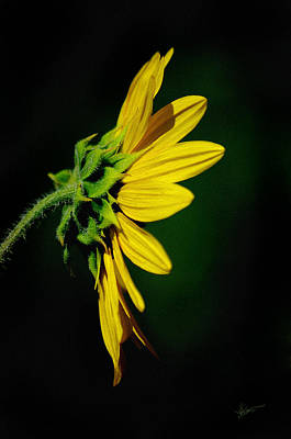 Poster featuring the photograph Sunflower In Profile by Vicki Pelham