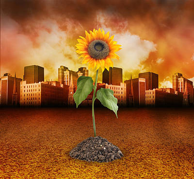 Sunflower In Red City Poster by Angela Waye