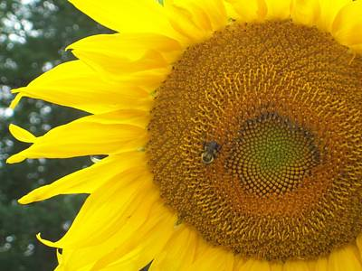 Poster featuring the photograph Sunflower by Lou Ann Bagnall