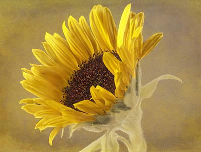 Sunflower Poster by Fiona Messenger