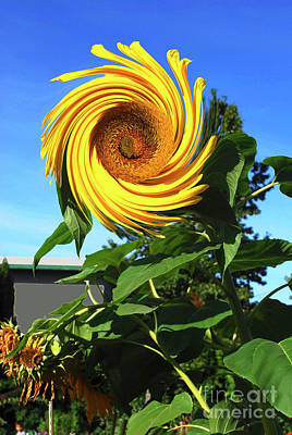 Sunflower Twirl Poster