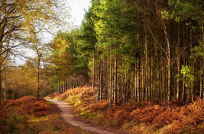 Sunlight Across Trees In Cannock Chase Poster by Verity E. Milligan
