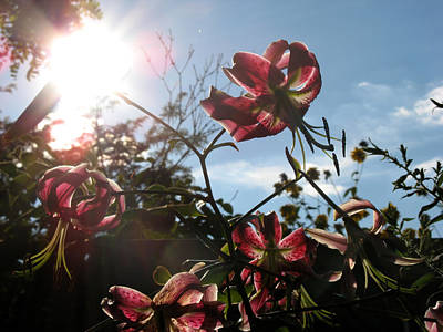 Poster featuring the photograph Sunlight Through Flowers by Kimberly Mackowski