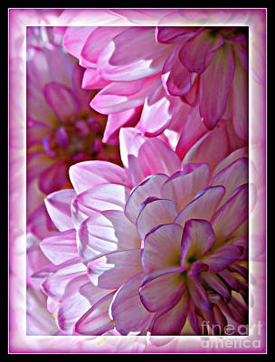 Sunlight Through Pink Dahlias Poster by Carol Groenen