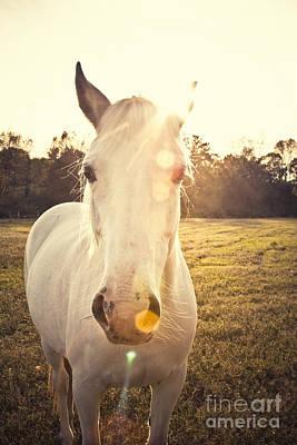 Sunlit Horse Poster by Erin Johnson