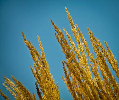 Sunny Golden Grass Poster